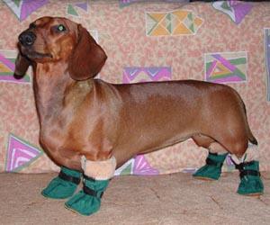 Обувь для такс своими руками